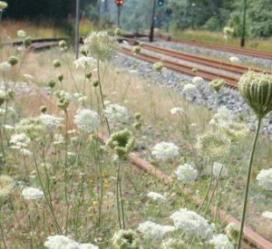 Afløsning på arbejdsmiljøområdet i Dansk Jernbaneforbund